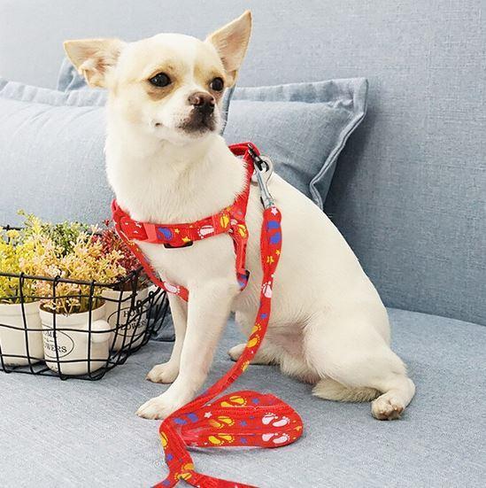 Регулируемый ошейник для щенков и маленьких собак Idepet