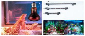 Какую лампу для питомцев купить на Алиэкспресс